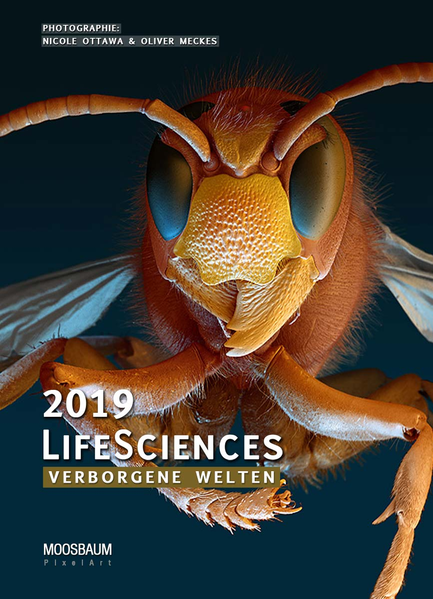 LifeSciences Kalender 2019 (Arbeitstitel), Hornisse 4x (c) eye of science